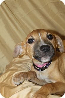 Shepherd (Unknown Type) Mix Puppy for adoption in Waldorf, Maryland - Celeste