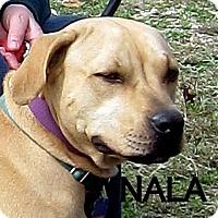 Adopt A Pet :: Nala - Wimberley, TX
