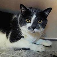 Adopt A Pet :: Sasha - El Dorado Hills, CA