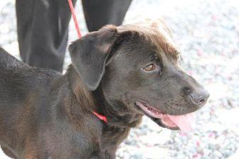 Basset Hound Mix Dog for adoption in Greensboro, North Carolina - Mae