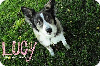 Border Collie Mix Dog for adoption in Hamilton, Ontario - Lucy