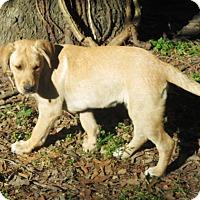 Adopt A Pet :: HOPE - Carrollton, TX