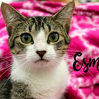 Adopt A Pet :: Esme - Wichita Falls, TX