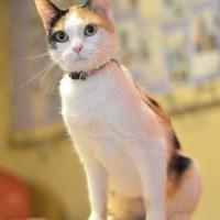 Adopt A Pet :: Quintessa - Madison, WI