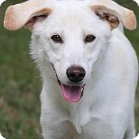 Adopt A Pet :: Teagan - Little Compton, RI