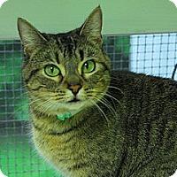 Adopt A Pet :: Abigail - Lunenburg, MA