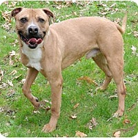 Adopt A Pet :: Chaco - Chicago, IL