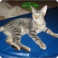 Adopt A Pet :: NIkki - Phoenix, AZ