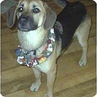 Adopt A Pet :: Stella - cedar grove, IN