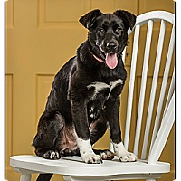 Adopt A Pet :: Jasmyne - DRD program - Owensboro, KY