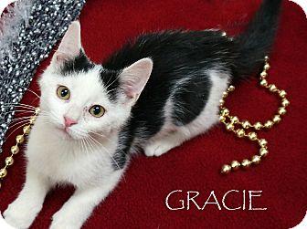 Domestic Shorthair Cat for adoption in Wheaton, Illinois - gracie