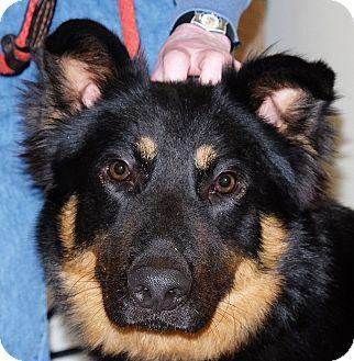 German Shepherd Dog Mix Dog for adoption in Spokane, Washington - Bruno