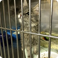Adopt A Pet :: Romani - Byron Center, MI