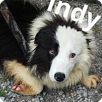 Adopt A Pet :: Indy - WAterford, WI