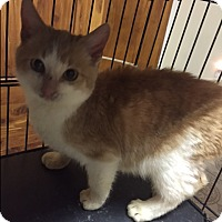 Adopt A Pet :: Mike - Forest Hills, NY