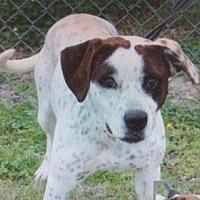 Adopt A Pet :: Lodi - Bristol, TN