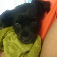 Adopt A Pet :: Mack - Greenville, KY