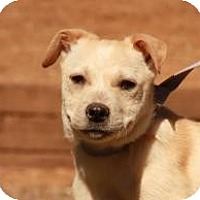 Adopt A Pet :: Peaches ($300) - Ocala, FL