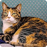Adopt A Pet :: Sophie - Chester, MD