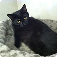 Adopt A Pet :: Thunder - Riverhead, NY