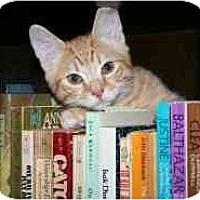 Adopt A Pet :: Maxwell - Marietta, GA