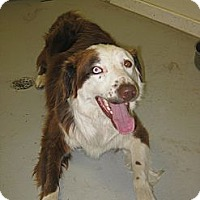 Adopt A Pet :: Woody - Glenrock, WY