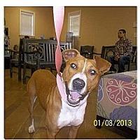 Adopt A Pet :: Savannah - Shirley, NY