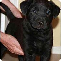 Adopt A Pet :: George - Gilbert, AZ