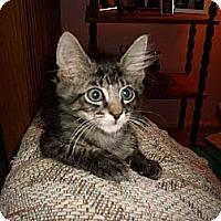 Adopt A Pet :: Clayton - Kirkwood, DE