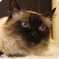 Adopt A Pet :: Lady - Laguna Woods, CA