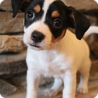 Adopt A Pet :: Dempsey - Wytheville, VA