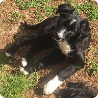 Adopt A Pet :: MoJo - Smyrna, GA