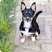 Adopt A Pet :: Catharine - Austin, TX