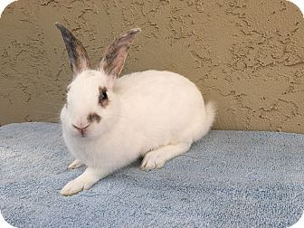 Other/Unknown Mix for adoption in Bonita, California - Riley