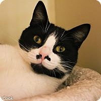 Adopt A Pet :: Oliver - Ann Arbor, MI