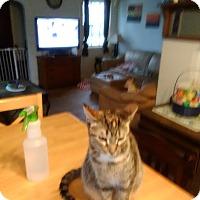 Adopt A Pet :: Mia - Rockford, IL
