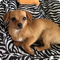 Adopt A Pet :: Lila - San Diego, CA