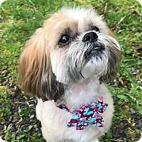 Adopt A Pet :: Maddie - Vancouver, WA