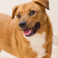 Adopt A Pet :: Sawyer - Cartersville, GA