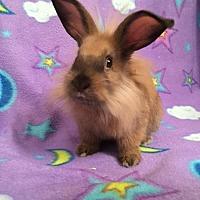 Adopt A Pet :: Cinnamon - Scotts Valley, CA