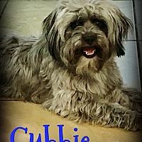 Adopt A Pet :: CUBBIE - Phoenix, AZ