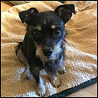 Adopt A Pet :: Gatsby - Winder, GA