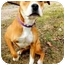 Photo 3 - American Pit Bull Terrier Mix Dog for adoption in Kansas City, Missouri - Salsa