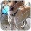 Photo 2 - Labrador Retriever Mix Dog for adoption in Preston, Connecticut - CiCi