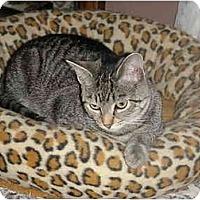 Adopt A Pet :: Willie (F) - Chesapeake, VA