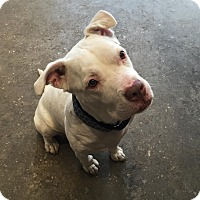 Adopt A Pet :: Tennessee - Brooklyn, NY