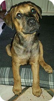 Terrier (Unknown Type, Medium) Mix Puppy for adoption in Ft. Lauderdale, Florida - Braden