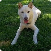 Adopt A Pet :: Jen - Los Angeles, CA