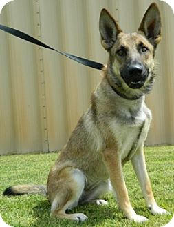German Shepherd Dog Mix Dog for adoption in Columbus, Nebraska - MacKenzie