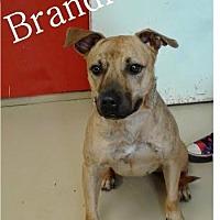 Adopt A Pet :: Brandi - Ozark, AL